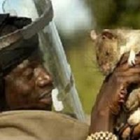 TRADITIONAL HEALER WITH MONEY RATS/AMAGUDWANE